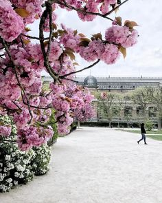 It's crazy to see how pinkish this city becomes in spring! Blossoms are everywhere but pink seems to be the colour Paris chose to embellish its trees