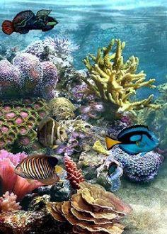 sea life - sea life photography - sea life underwater - sea life artwork - sea life watercolor sea l Under The Water, Life Under The Sea, Under The Ocean, Sea And Ocean, Underwater Creatures, Underwater Life, Ocean Creatures, Underwater Animals, Fauna Marina