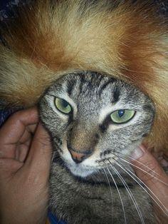 Hoho..Kechik dengan rambut afro..