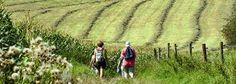 Het Zuid-Limburgse heuvelland is een gebied met een uniek karakter. Met zijn steile hellingen afgewisseld met holle wegen, de groene heuvels verfraaid door hoogstamboomgaarden, de ongekende rust, de prachtige flora en fauna, de vakwerkboerderijen, de vele kapelletjes en kruisbeelden en de prachtige uitzichten maken dit gebied zelfs uniek voor Nederland. Laat u verrassen door de vele, mooie wandeltochten door het prachtige Zuid-Limburgse heuvelland en de aangrenzende gebieden.