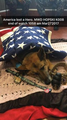 God Bless and Thank you for service and dedication. My deepest condolences to your family, friends and fellow servicemen. MWD Hopski K008