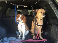 The Active Pack Tests Kurgo's Car Safety Products for Dogs and Drivers