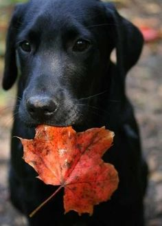 puppies in fall...couldn't be more perfect