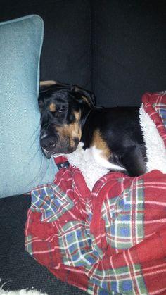Charlie... Lazy day's