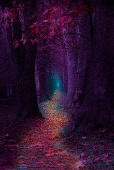 """ Fairytale Pathway "" by Mevludin Sejmenovic on 500px"