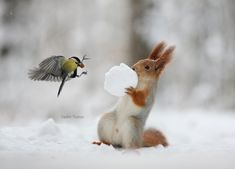 Белка и синица. / Фото: Вадим Трунов