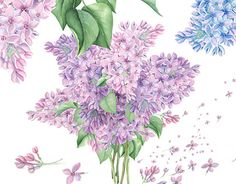 """Check out new work on my @Behance portfolio: """"Spring Lilac. Watercolor"""" http://be.net/gallery/50961971/Spring-Lilac-Watercolor"""