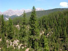 El bosque boreal podría tener la solución para frenar el cambio climático - http://www.meteorologiaenred.com/el-bosque-boreal-podria-ser-la-solucion-para-frenar-el-cambio-climatico.html