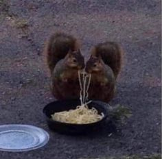 Cute Little Animals, Baby Animals, Funny Animals, Animals Kissing, Memes Lol, Funny Memes, Couple Aesthetic, Aesthetic Pictures, Reaction Pictures