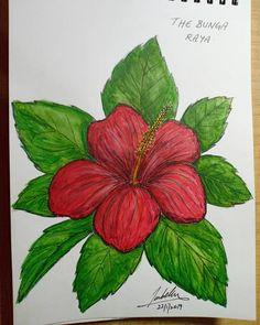 Gambar Bunga Raya Untuk Mewarna Koleksi Gambar Bunga