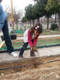 Seguimos abonando la tierra de las cebollas, ahora, con abono orgánico