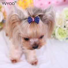 YVYOO Lovely Pet dog Hair Accessories Polyester Bow tie Colorful Hairpin hair dress up supplies Small Puppies, Small Dogs, Dogs And Puppies, Pet Puppy, Pet Dogs, Dog Cat, Shih Tzu, Dog Hair Bows, Dog Branding