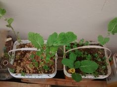 Vaso capilaridade ou freático - horta em casa