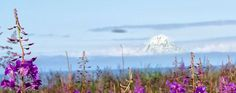 "9/19/2012  Standing in the tall, tall fireweed with my friend Johan…. Johan was giving me great tips and I was loving it.  It took a few tries but I love the results.  Life is kinda like that…. sometimes we just have to….""Keep on… keepin' on!""   Mt. Redoubt from the Nikiski Beach, Alaska."