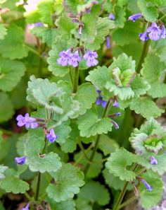 Magic Herbs, Landscaping Trees, Gardening Tips, Natural Remedies, Herbalism, Flora, Healthy Living, Food And Drink, Healthy Recipes