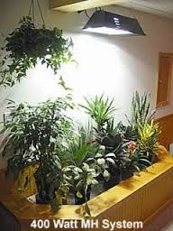 110 Best Vertical Plant Wall Interior Images In 2019 640 x 480