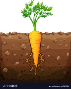 Carrot with root underground illustration Plant Lessons, Early Childhood Centre, Garden Mural, Fall Preschool, Montessori Materials, Card Making Tutorials, Plantation, Fruit And Veg, Trees To Plant
