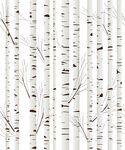 Birch wood trees background Vector Image Vector illustration of Backgrounds Textures Abstract lirch Free Vector Clipart, Clipart Design, Wood Tree, Birch Tree Decor, Birch Trees, Fabric Wall Art, Tree Bark, Easy Install, Background Patterns