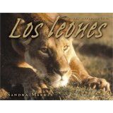 Los leones by Sandra Markle (Lerner Press, 2007) can be purchased on Amazon or borrowed from the KDL Cascade or Fennville Childrens libray