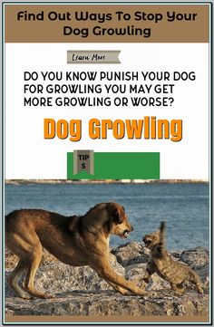 Don't fret about slugging along the big bag of dog food as you can simply pick up more dog food at your destination ** More ideas could be found at the image url. Training Your Puppy, Dog Training Tips, Mans Best Friend, Best Friends, Dog Growling, Puppy Stages, The Uncanny, Crate Training, New Puppy