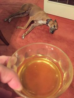 My dog was not psyched for Rosh Hashanah http://ift.tt/2ecnmPh