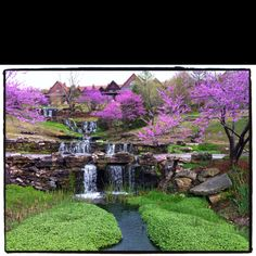 Redbud trees in full bloom at Big Cedar Lodge. Pat one of you great photo's! Most Beautiful Flowers, Beautiful Scenery, Beautiful World, Great Places, Places Ive Been, Places To Go, Trees And Shrubs, Trees To Plant, Redbud Trees