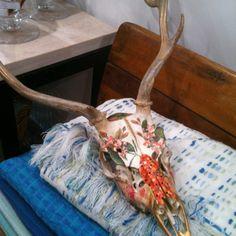 Beautiful deer skull!