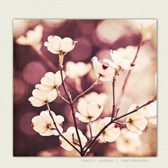 Dogwood Wall Art Flower Photo  burgundy nature by TraceyCapone, $30.00