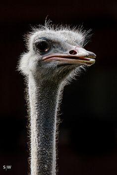 "Bird Humor: I Said ""/"""