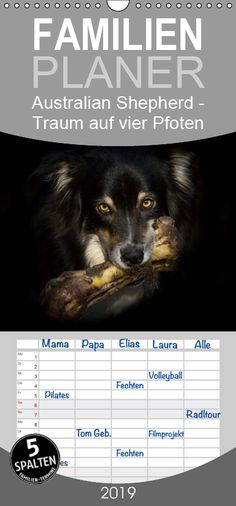 Australian Shepherds, Products, Four Seasons, Wall Calendars, Animal Photography, Pictures, Aussie Shepherd, Gadget, Australian Shepherd