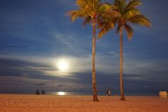 Hollywood Beach Florida, USA  Copyright MloPhoto