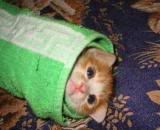 Kitty Roll up!!