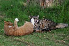 Muffi&Tiger
