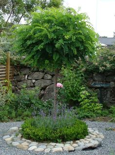 Beeteinfassung mit Feldstei… Ball acacia planted with lavender and boxwood. Beeteinfassung with field stones. Garden Trees, Garden Paths, Small Gardens, Outdoor Gardens, Amazing Gardens, Beautiful Gardens, Contemporary Garden, Garden Cottage, Plantation