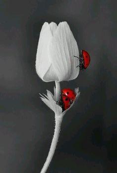 наша-саюри-Сан:  ~Красный~
