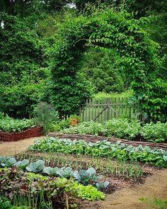 9 Simple Gardening Hacks You Probably Didn't Know About - garden & flowers - Garten Diy Garden Projects, Diy Garden Decor, Garden Ideas, Farm Gardens, Outdoor Gardens, Gardening For Beginners, Gardening Tips, Home Vegetable Garden Design, Vertical Vegetable Gardens