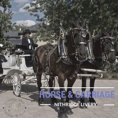 Arrive in Style with our Horse & Carriage. Exclusively at Nithridge Estate. Horse Carriage, Wedding Events, Tours, Horses, Animals, Style, Swag, Animales, Animaux