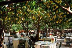Capri, dining under lemon trees? Divine!