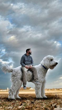 Giant Dogs, Big Dogs, Lion Sculpture, Survival, Statue, Cute, Animals, Image, Google