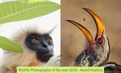 Wildlife Photographer of the year 2016 Award finalists by Natural History Museum. Read full article: http://webneel.com/best-award-winning-wildlife-photography-inspiration | more http://webneel.com/photography-news | Follow us www.pinterest.com/webneel