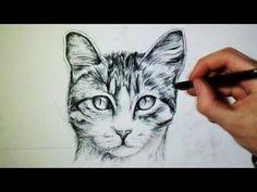 Comment dessiner un chat [Tutoriel]