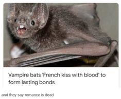 Vampire Bat, French Kiss, Bond, Halloween Humor, Romance, Cats, Connect, Animals, People