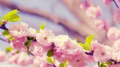 Spring HD Wallpaper | 999HDWallpaper
