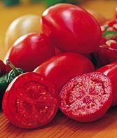 Fresh Salsa Tomato Seeds and Plants, Vegetable Gardening at Burpee.com
