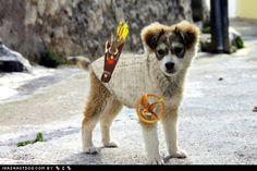 Hunger Games puppy