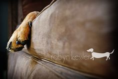 Yesterday A Moment Later: Rocco {Dog Photography}