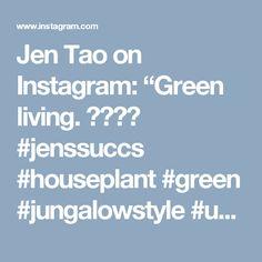 "Jen Tao on Instagram: ""Green living. 😊✌🌱🌿 #jenssuccs #houseplant #green #jungalowstyle #urbanjunglebloggers #bohostyle #boho"""