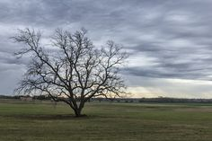 The Lonely Tree   Flickr - Photo Sharing!