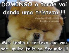 Domingo tá Acabando Teddy Bear, Humor, Gifs, Facebook, Good Morning Gif, Good Afternoon, Living Alone, Nighty Night, Thoughts