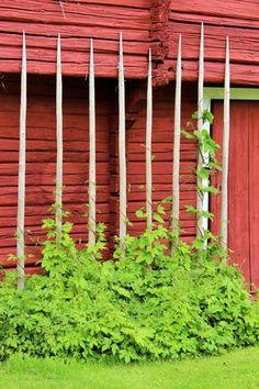 Porch Garden, Garden Arbor, Garden Fencing, Terrace Garden, Garden Spaces, Garden Planters, Indoor Flowers, Dream Garden, Permaculture